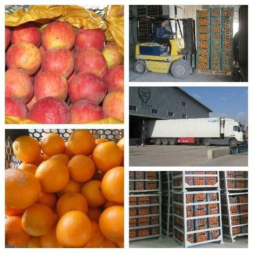 میوه ایام نوروز به حد کافی ذخیره شده و روزانه در حال توزیع می باشد