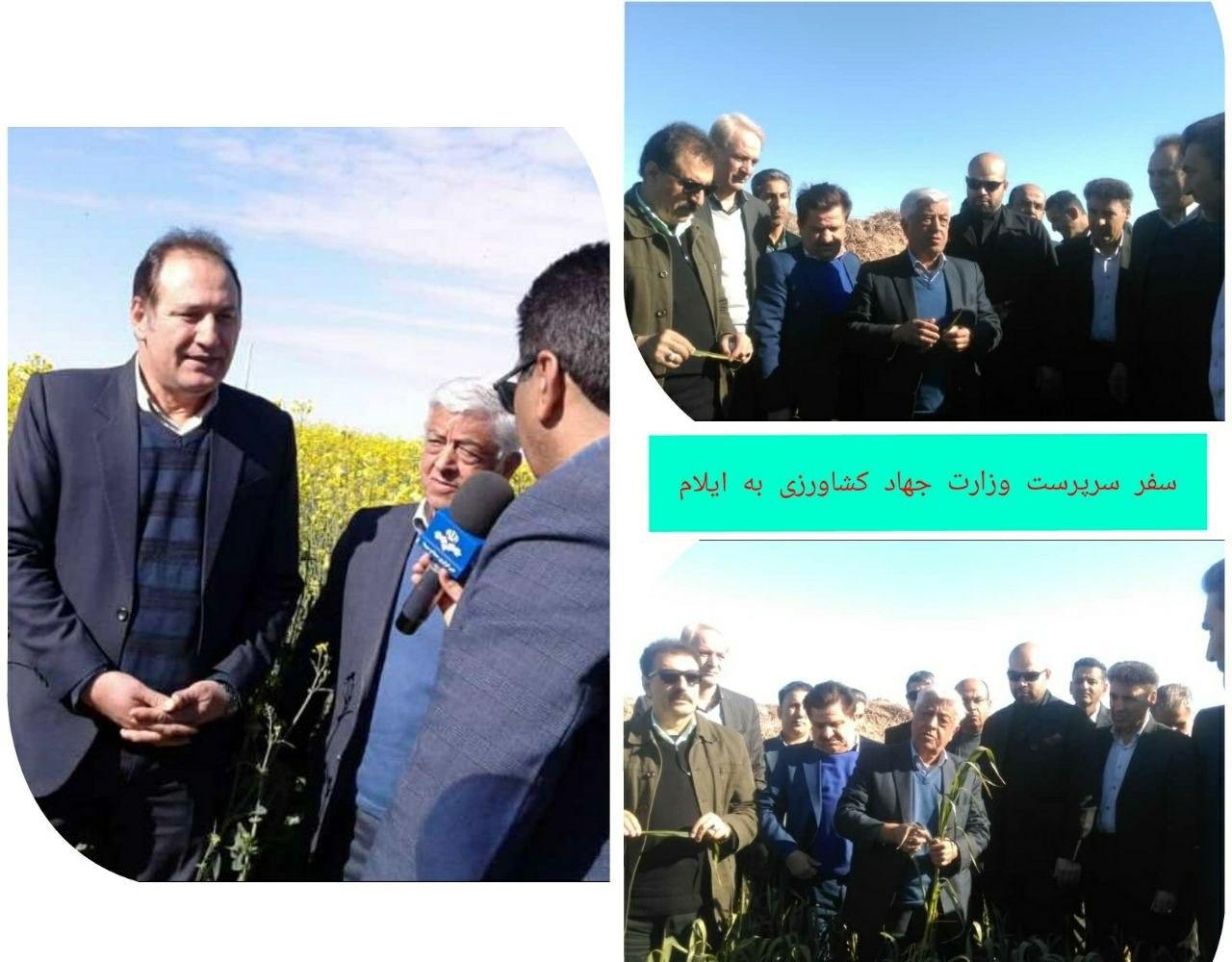 ? بازدید سرپرست وزارت جهاد کشاورزی از مزارع کشاورزی شهرستان دهلران در استان ایلام