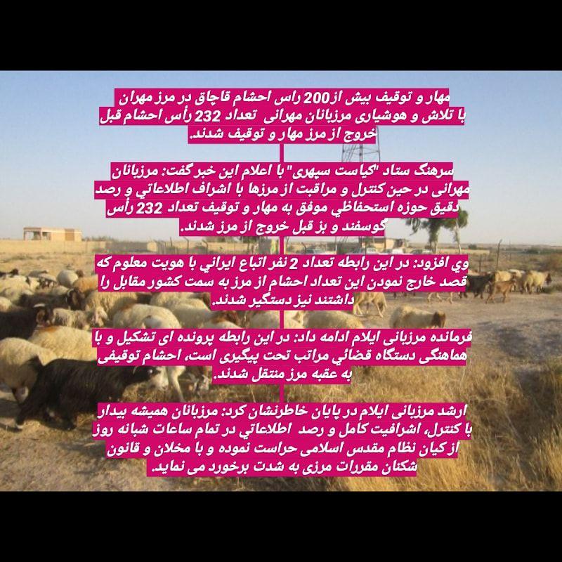 مهار و توقیف بیش از۲۰۰ راس احشام قاچاق در مرز مهران