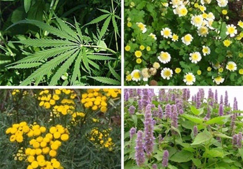 هشت هزار و ۴۲۵ گونه گیاهی در کشور شناسایی شده است