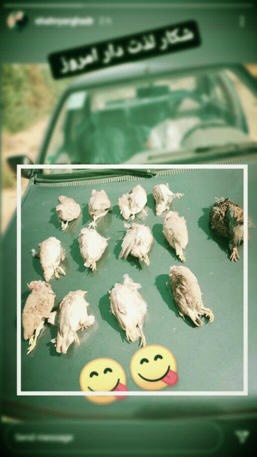 عاملانتشار پرندگان شکار شده در فضای مجازی بازداشتشد