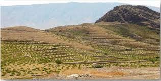 احیا، توسعه و غنی سازی اراضی جنگلی بلوط استان نیازمند ۵۰۰ میلیارد ریال اعتبار است