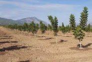 ۶۰ هزار جنگل کاری و بیابان زدایی در ایلام یک رکورد دست نیافتنی است