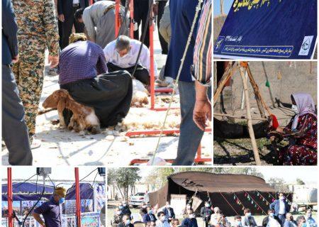 اولین دوره مسابقات پشم چینی مکانیزه در سطح کشور در دهلران برگزار شد